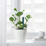 Picture of IKEA CHILIPULVER Plant Watering Sensor, Green