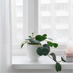 FEJKA Artificial Potted Plant Peperomia