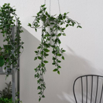 Picture of IKEA FEJKA Artificial Potted Plant, In/Outdoor/Hanging 9 cm