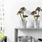 IKEA FEJKA Artificial Potted Plant in-outdoor Succulent 12 cm